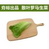 散叶罗马生菜新鲜果蔬绿色蔬菜沙拉火锅西餐食材批发销售餐饮门店