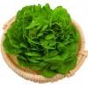 奶油绿生菜波士顿新鲜果蔬绿色蔬菜沙拉火锅西餐食材批发销售